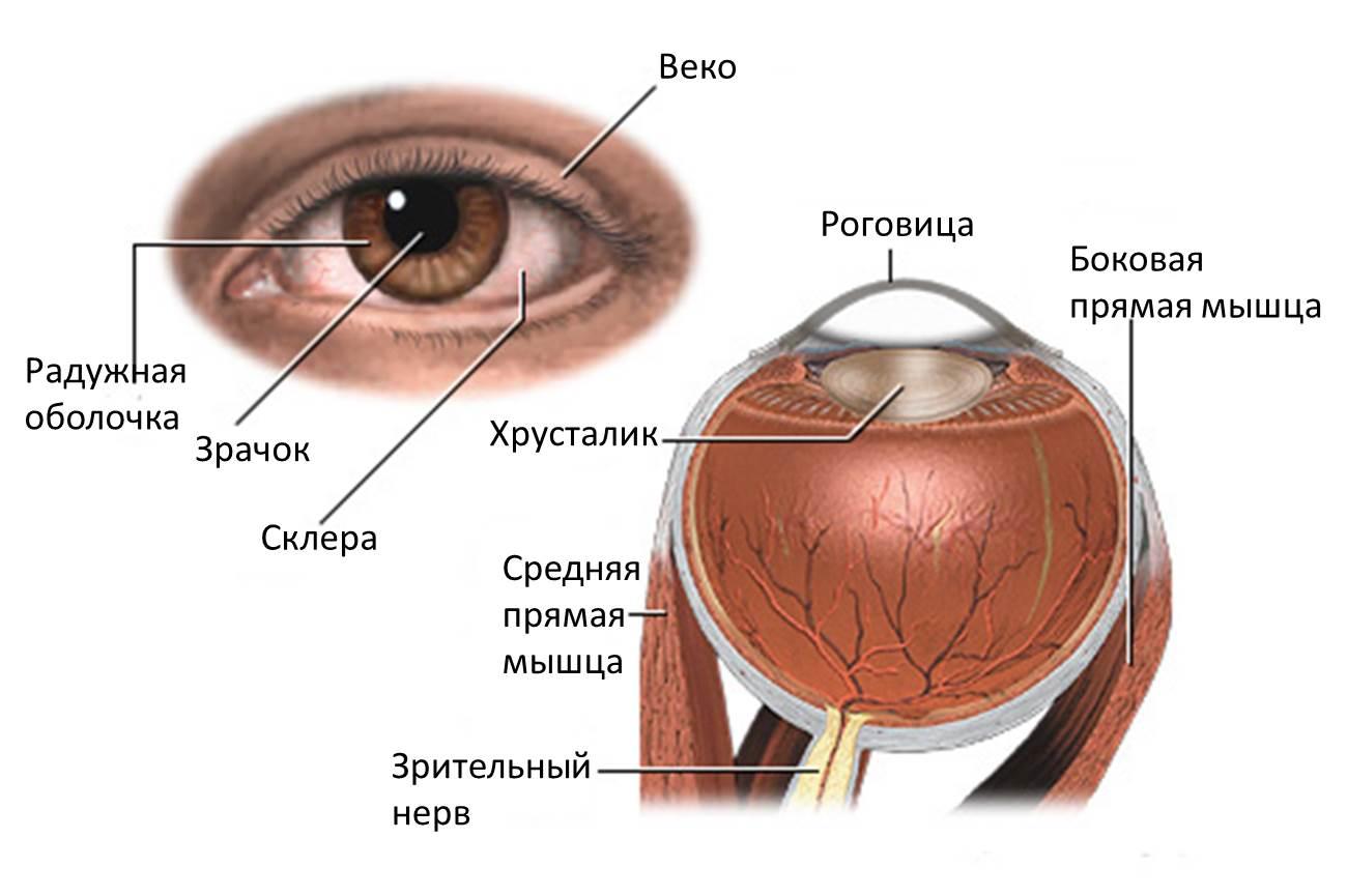 Отслойка сетчатки глаза пошагово