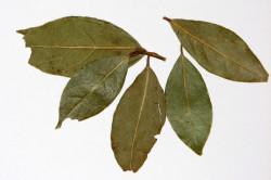 Лавровый лист при кератоме