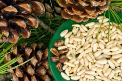 Кедровые орехи для борьбы с паразитами