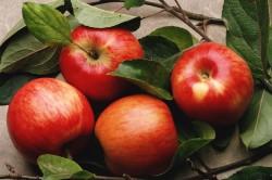 Польза яблок для зрения