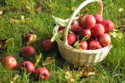 Яблоки для снижения температуры