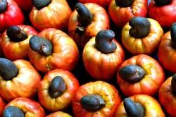 Чернильные орехи для лечения гангрены